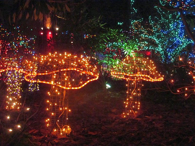 vandusen lights mushrooms